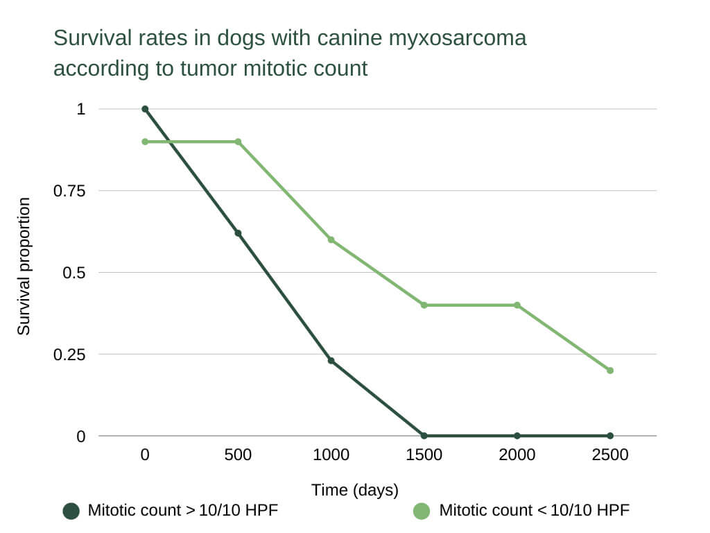 How Long Can Dogs Live With Skin Cancer