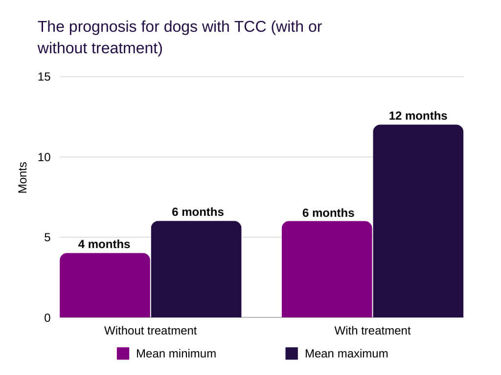 bladder cancer in dogs The prognosis for dogs with TCC (with or without treatment)