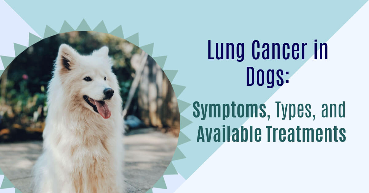 Lung Cancer in Dogs: Symptoms, Types, and Available Treatments