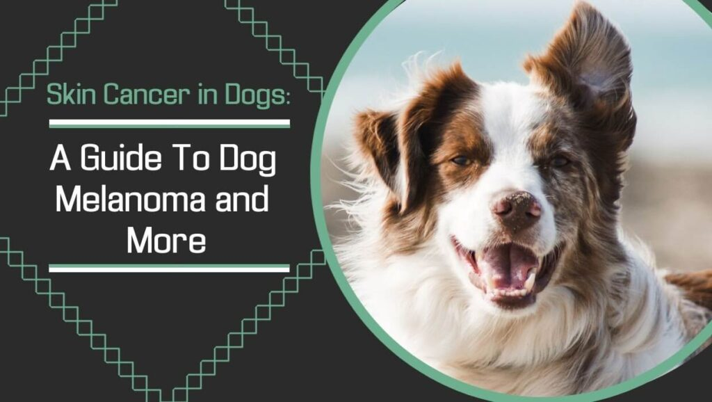 Skin Cancer in Dogs