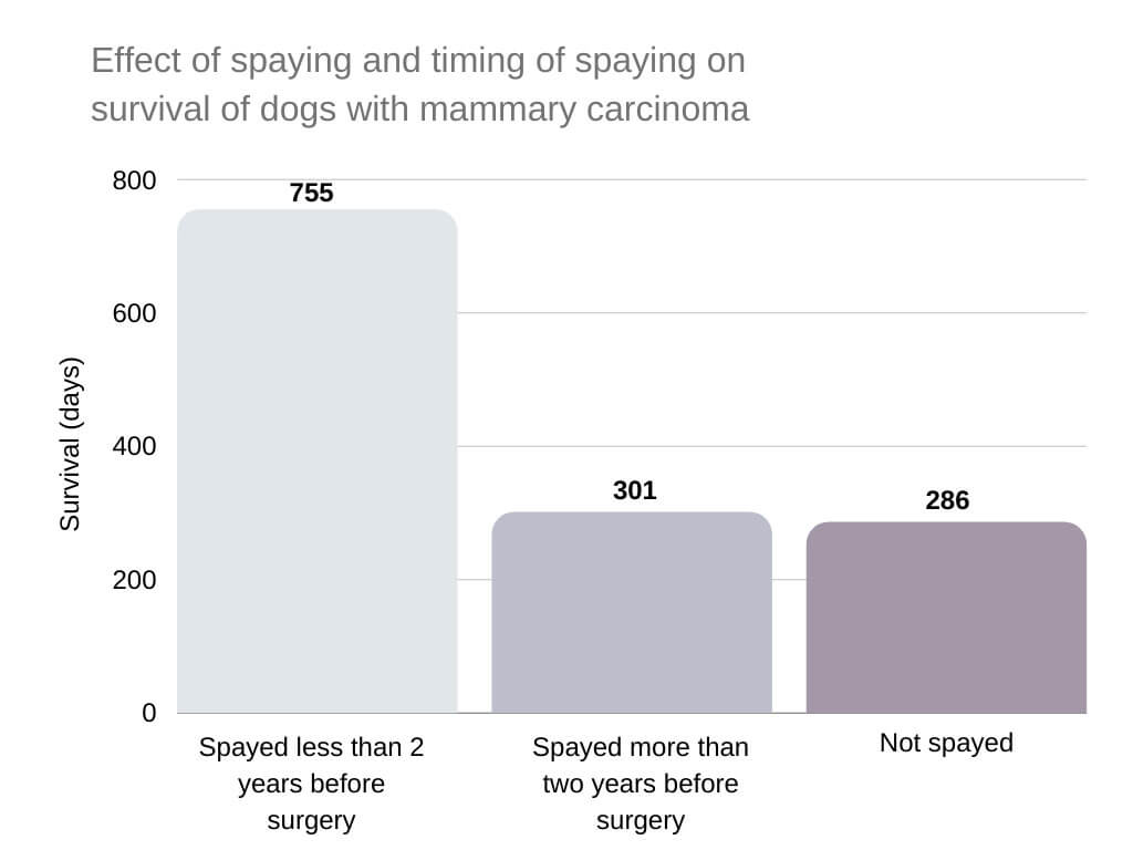 Spaying Intact Dogs