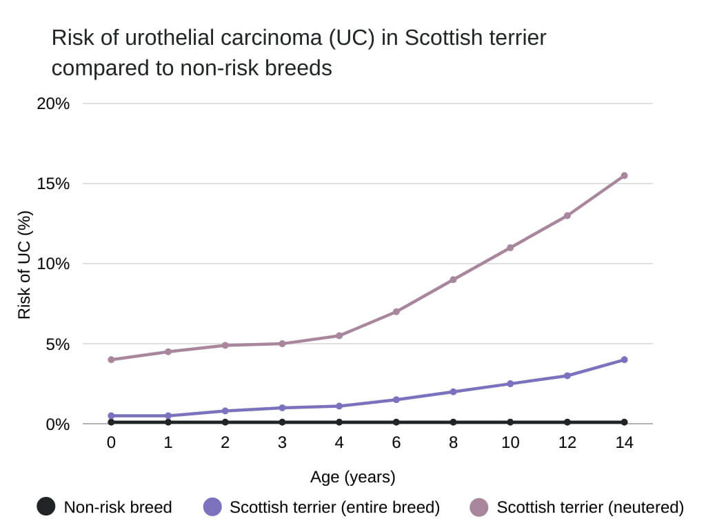 bladder cancer in dogs Risk of urothelial carcinoma (UC) in Scottish terrier compared to non-risk breeds